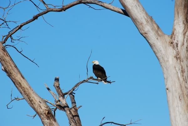 Better Bird Watching with RCS Optics.
